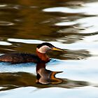 Grebe Reflections by Rodney55