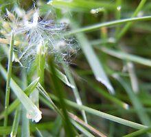 Dandelion Blow- Utah by jkohala