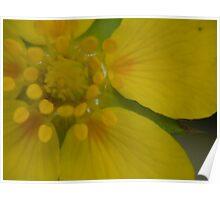 Sunrise Flower- Utah Poster
