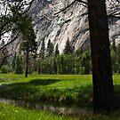 Meadow by Barbara  Brown