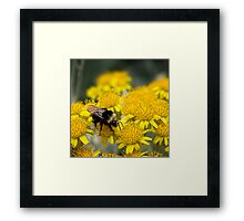 Bumble boogie Framed Print