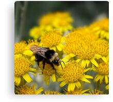 Bumble boogie Canvas Print