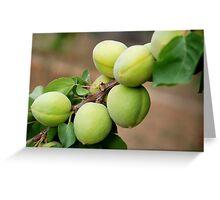 Apricots - Iran Greeting Card