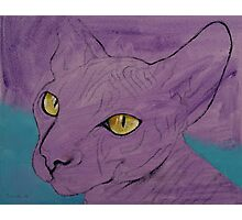 Purple Sphynx Photographic Print
