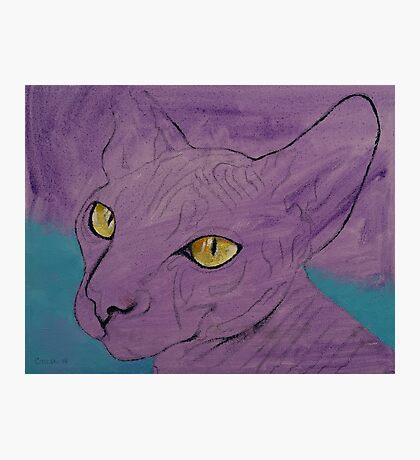 Purple Sphynx Photographic Print