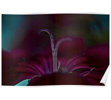 Dark Flower Poster