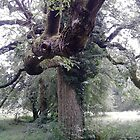 Knotted tree, Stroud by Alexandria Mia Dancey