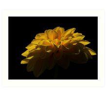 Yellow flower #1 Art Print
