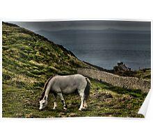 Gray horse at Marloes Poster
