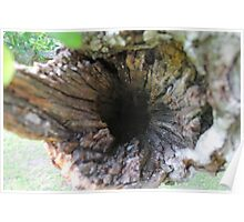 Hollowed Tree Branch Poster