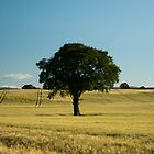 Lonely tree by Matt Sillence