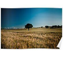 Tree in Wheat field Poster