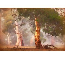 Misty forest - Anakie Photographic Print