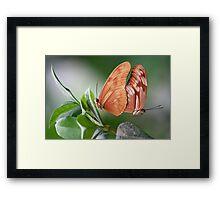Mating Framed Print