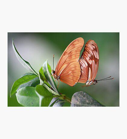 Mating Photographic Print