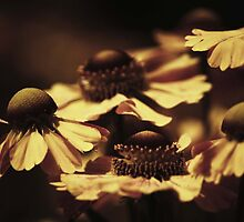 Flowers by ChePhotography