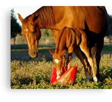 sharing is caring... maybe... Canvas Print