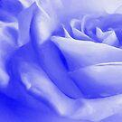 Misty Blue by naturelover