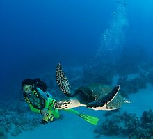 Swimming with a sea turtle by Fiona Ayerst