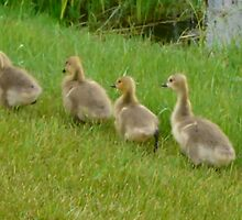5 little Soldiers,Marching Along...Goslings by MaeBelle