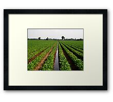 Beans, Beans, and More Beans Framed Print