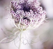 wild plant  by torishaa
