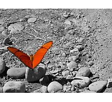 Orange Butterfly waiting for a Taxi Photographic Print