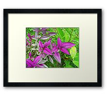 Purple People flower eater Framed Print