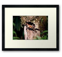 Russet Sparrow or Eurasian Wood Sparrow? Framed Print