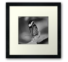 Glass Wing Framed Print