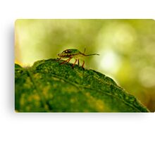--- out on a leaf ... Canvas Print