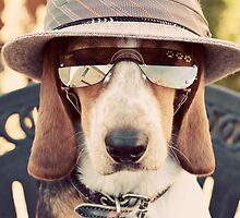 The Most Interesting Dog in the World by Darren Boucher