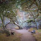 Cypress Grove, Point Lobos by Maria Draper