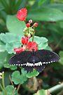 Black on Red by missmoneypenny