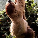 Linne's Two-Toed Sloth Bear by Magic-Moments