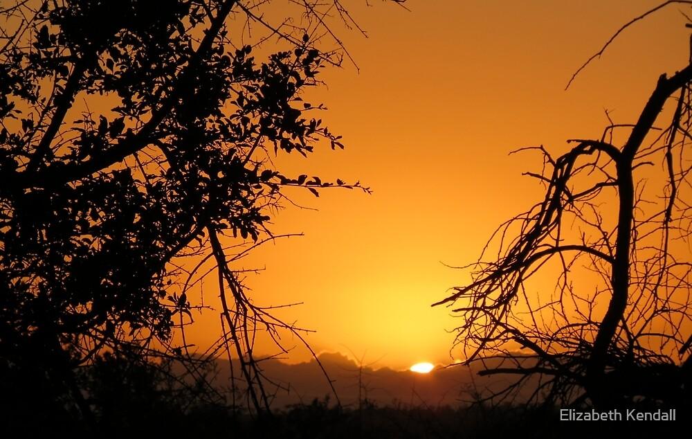 Sunrise in the Bushveld by Elizabeth Kendall