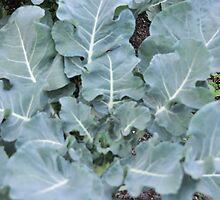 Okeechobee Farms - Broccoli by Eat  Real Food