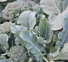 Okeechobee Farms - Broccoli Leaves by Eat  Real Food