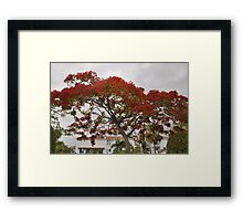 Red Tree or just the flowers Framed Print