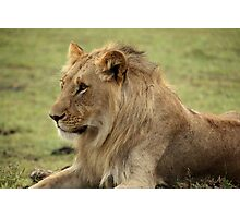 Out of Africa - On Alert Photographic Print