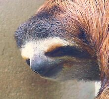 Sloth man, Save me by Michelle Hamilton