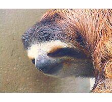 Sloth man, Save me Photographic Print