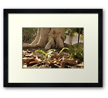 Tree about to walk Framed Print