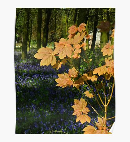 New Life-Spring in England Poster