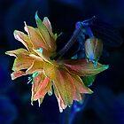 Nature's Jewels ! by Elfriede Fulda