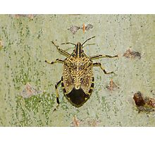 disabled bug  created pattren Photographic Print