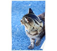 Cat - Close Up Poster