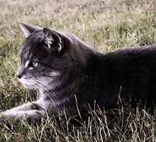 Amy the cat by Adelheid