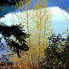 """Lake Crescent Spring"" by Lynn Bawden"