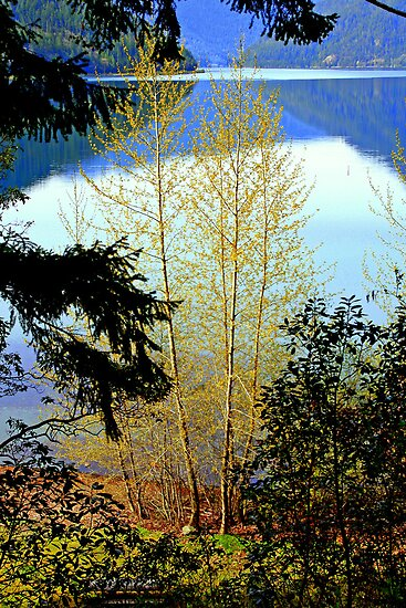 """Lake Crescent Spring"" by Lynn Bawden"